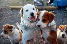 Fotos de Asociación de Protección de Animales Domésticos (P.A.D.)