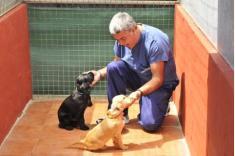 Fotos de Residencia Canina Canes