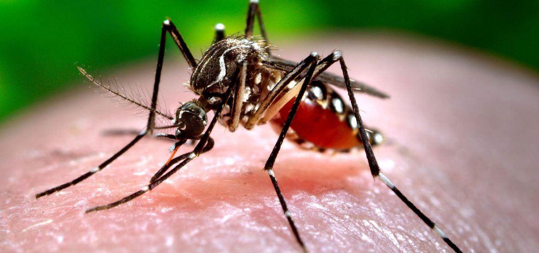 Consejos para prevenir la picadura del mosquito tigre - Contraplagas